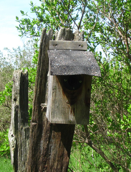 Can I use shingles for a birdhouse roof?