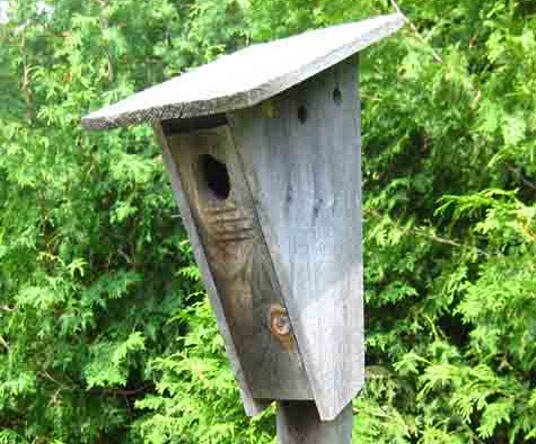 Peterson Bluebird Birdhouse with a large roof overhang and ventilation