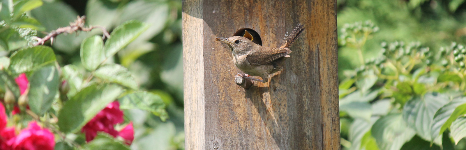 Hexagonal Wren Birdhouse